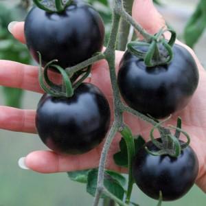 pomodori neri 1