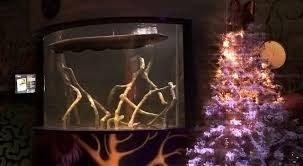 L'anguilla elettrica che illumina l'albero di Natale
