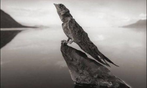 Natron, il lago che pietrifica gli animali