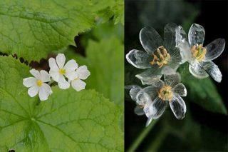skeletron-flower