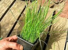 Le piante vanno in letargo… ricercatori lo confermerebbero
