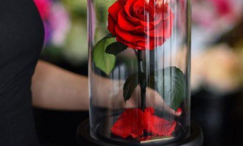 La rosa incantata che vive per sempre. Un romantico regalo.