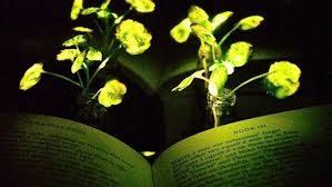 Inventate piante luminose per ridurre le emissioni